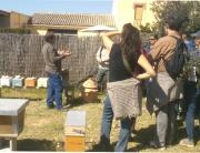 El taller de les abelles