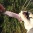 Els ratpenats del Parc del Foix